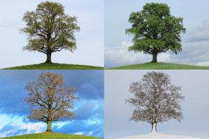 Kolo roku - cyklus ročních období