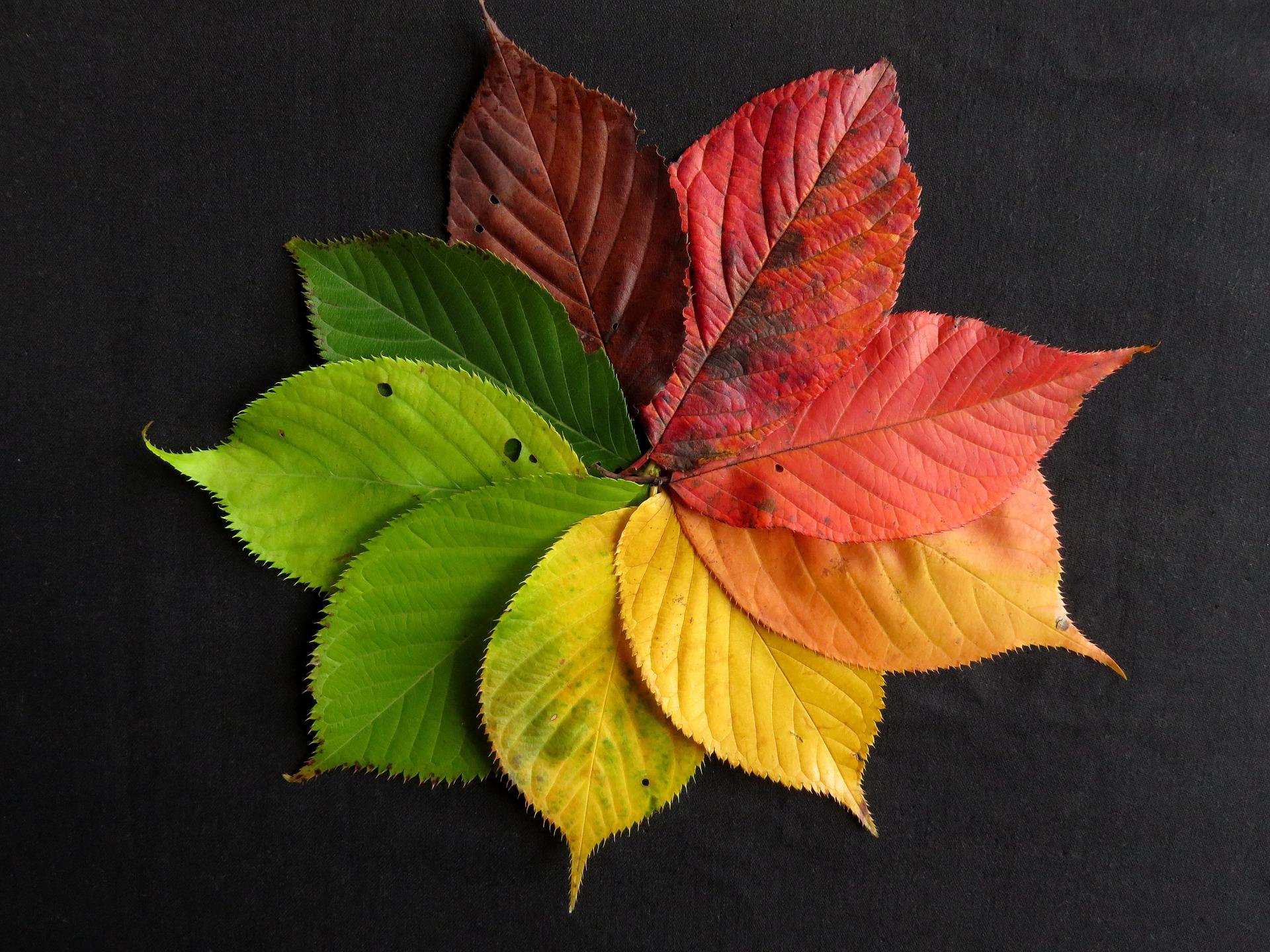 autumn-leaves-1486075_1920