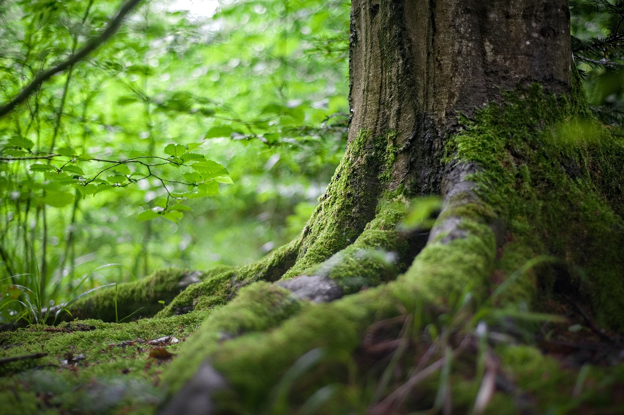 forest-2599720_1280