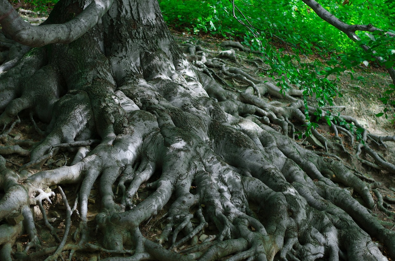 roots-164054_1280